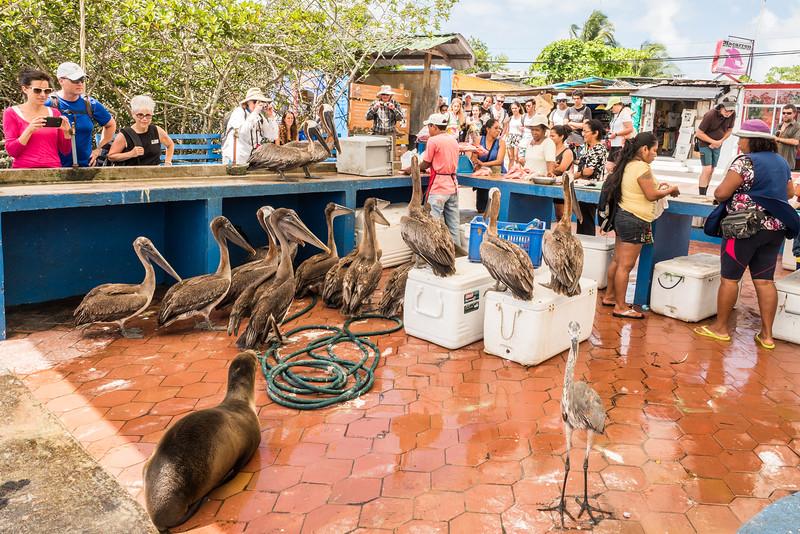Galapagos-Best-112.jpg