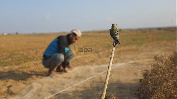 Palestinian men hunt migratory birds at the Israel-Gaza border