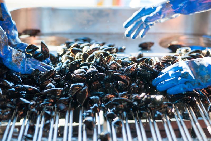 62. Matt Moretti, Bangs Island Mussels, mussel farm, Casco Bay, Maine, September 2013