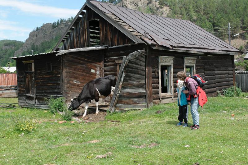 In diesem Haus in Bolschie Koty wohnen Pferde und Rinder.