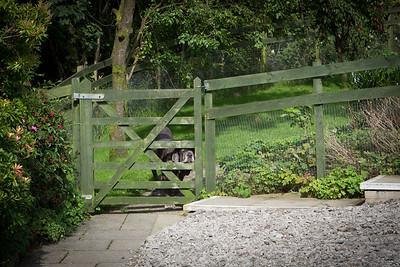 Animal Rescue Cumbria