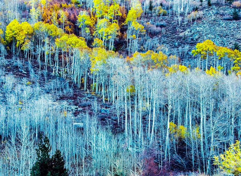 Sierras Fall Colors-4.jpg