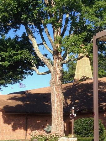 2014.09.07 St. Theresa Tree Split