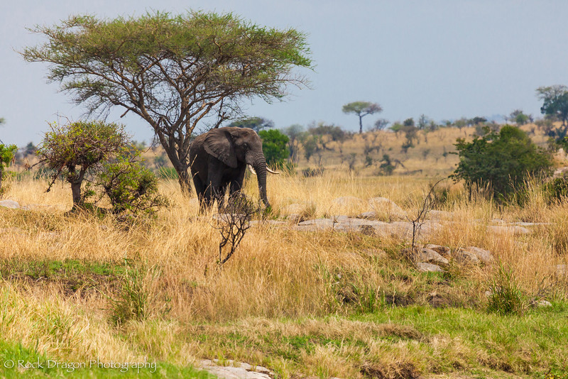 2_North_Serengeti-9.jpg