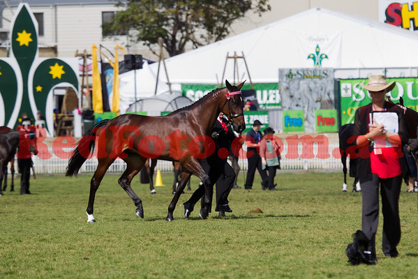2014 09 30 Perth Royal Show Standardbred