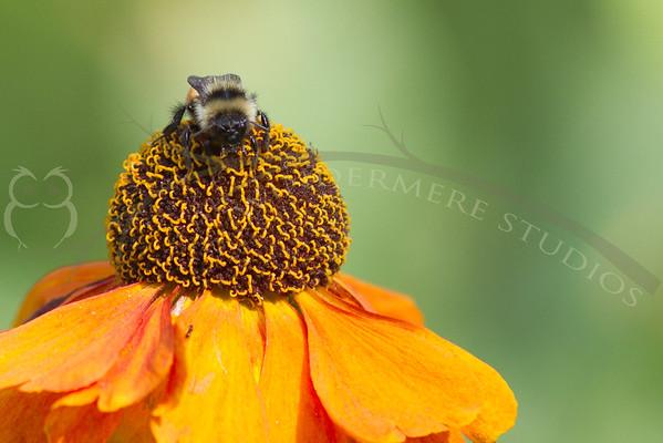 Bumbling Honeys