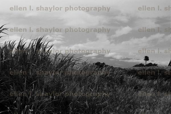 b & w landscapes