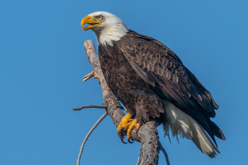20190501Home Eagles 5-1-19DSC_5670.jpg