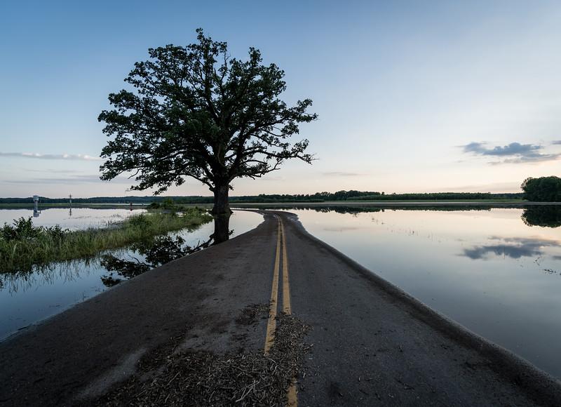 Bur Oak in McBaine, Missouri on 8 June 2019 - The Big Tree