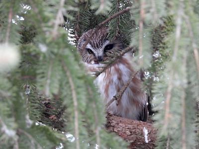 20210228 Owls