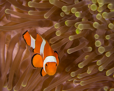 Indonesia (Underwater)