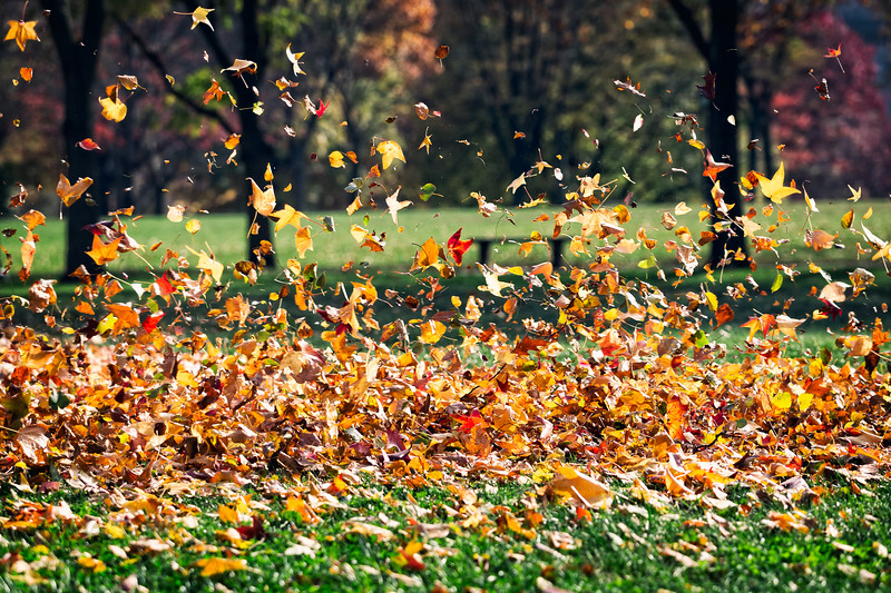 Dancing with the Leaves