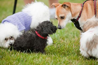 Bella Vista Doggies