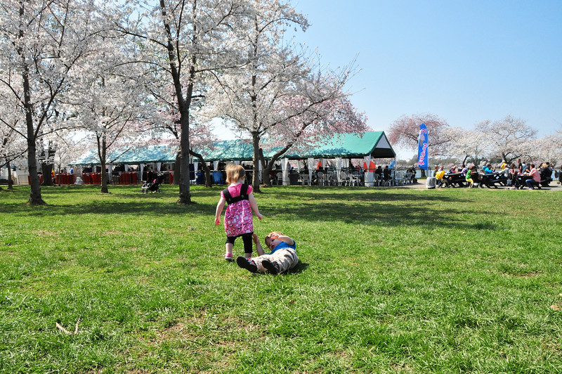 Cherry Blossoms 2014 031.jpg