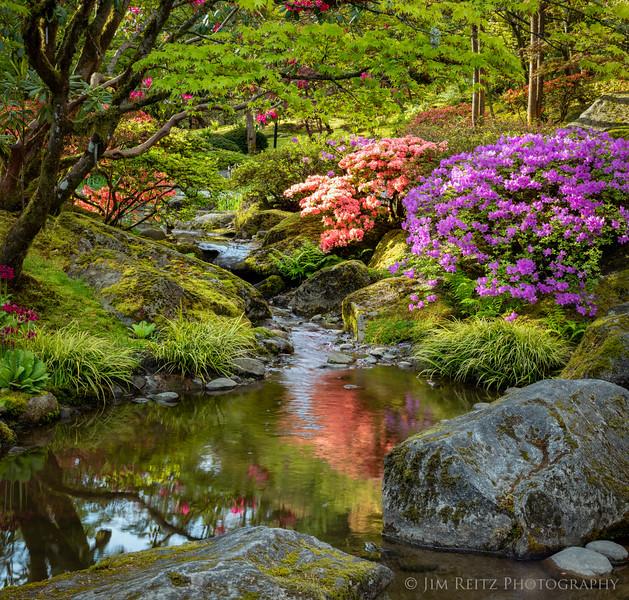 Seattle Japanese Garden this morning.