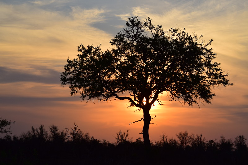 Tree With Sunset Background