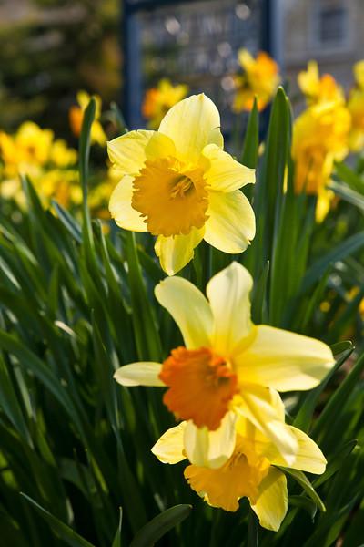 SpringFlowers-15.jpg