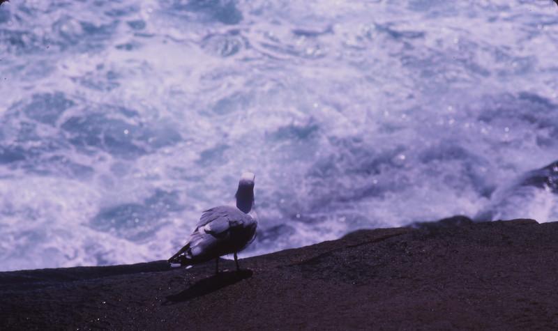 Nova Scotia 1983 - 077.jpg