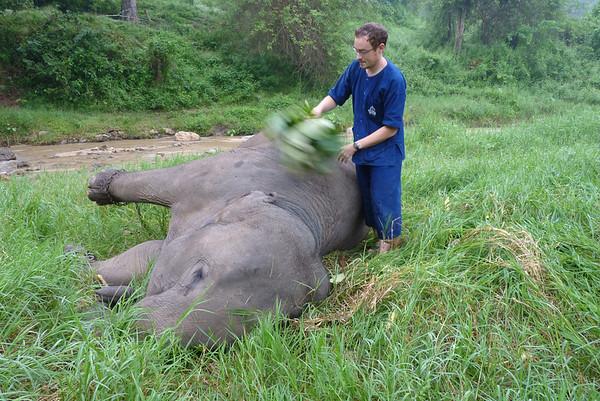 2011 OCT 21 ELEPHANTS