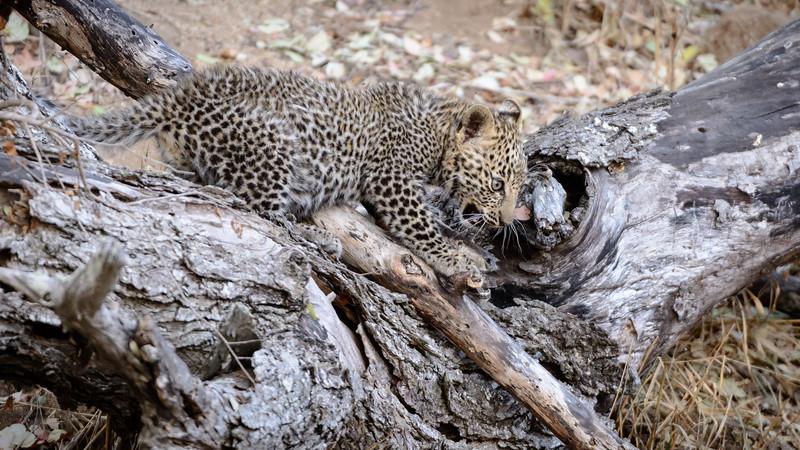 LeopardHills-20150825-2289.jpg