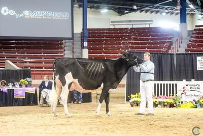 New York Holstein Int Cows 2018