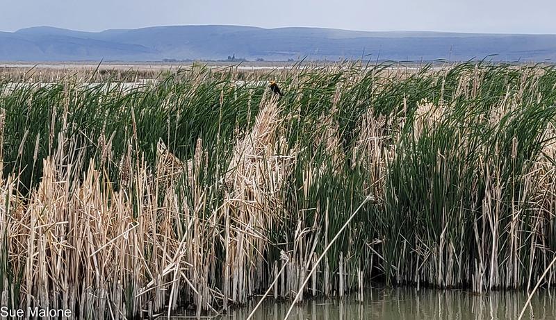 05-19-2021 Summer Lake Wildlife Refuge-23.jpg