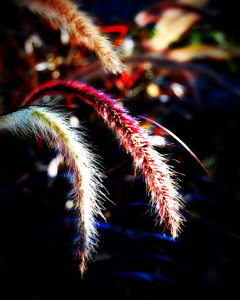 Nature Photography Pink Grass.jpg