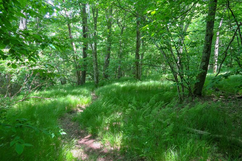 Greasy Cove Trail -- 5,250'
