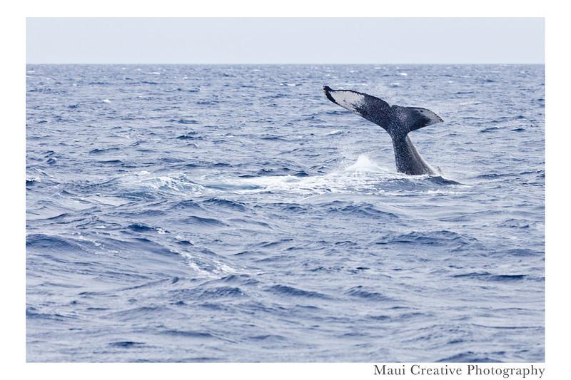 WhaleTales_2014_470.jpg