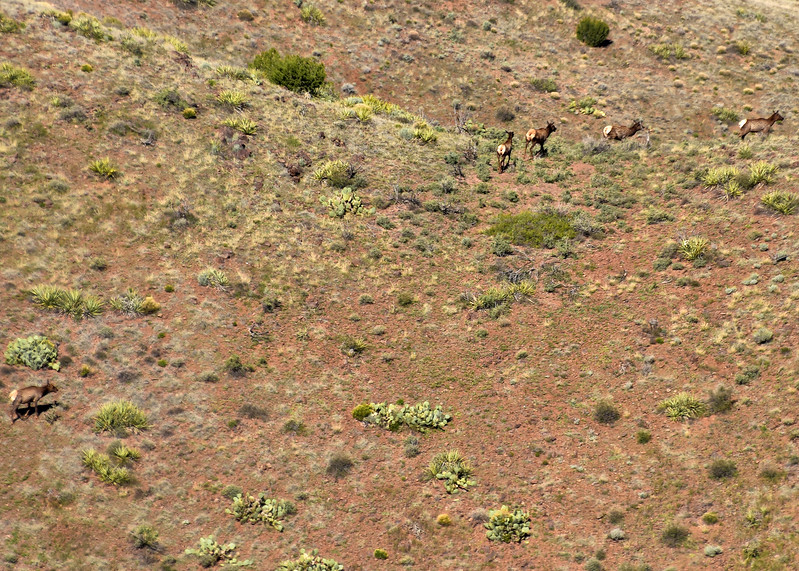 NEA_1011-7x5-Elk seen from top of chupadera.jpg