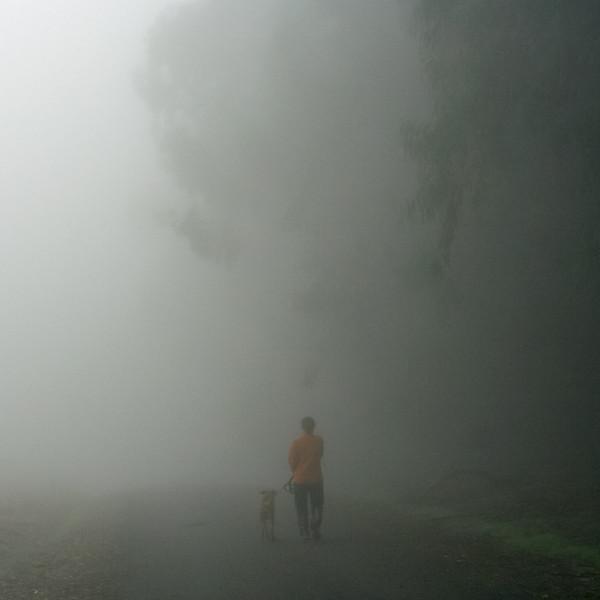 Dog Walker in Fog