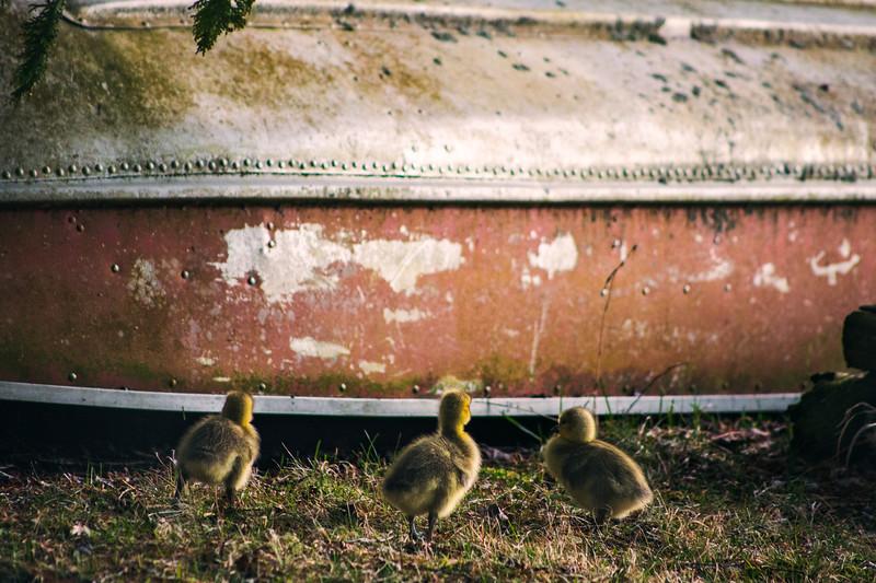 chicks 9.jpg