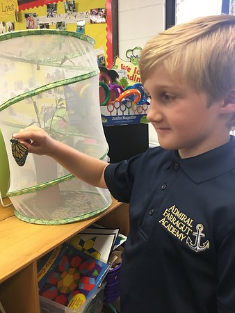 Our Monarch Butterflies are hatching!