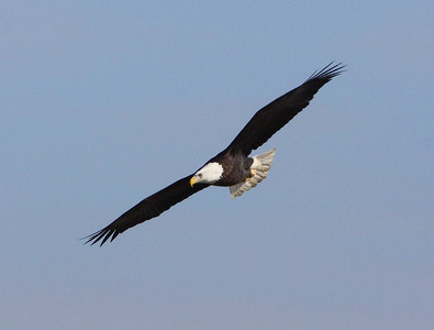 Clarksville Eagles