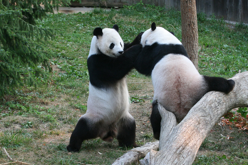 Panda080407_0006.JPG