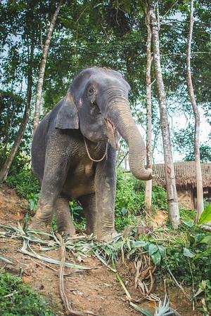 Elephant Edits-20