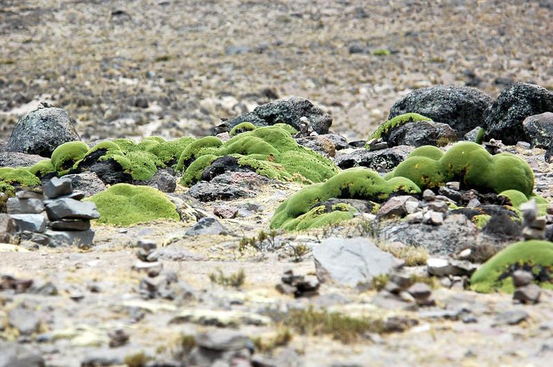 Peru Ecuador 2007-041.jpg