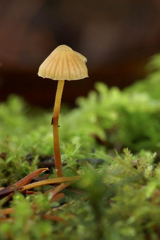 mushroomsingle.jpg