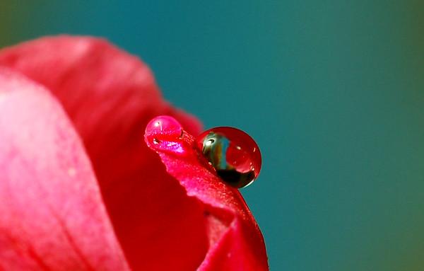 Droplets & Flora