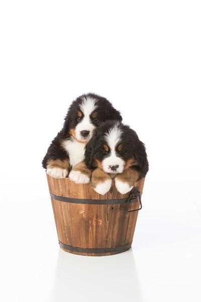 2013-Pearson Pups-Jun02-0451.jpg