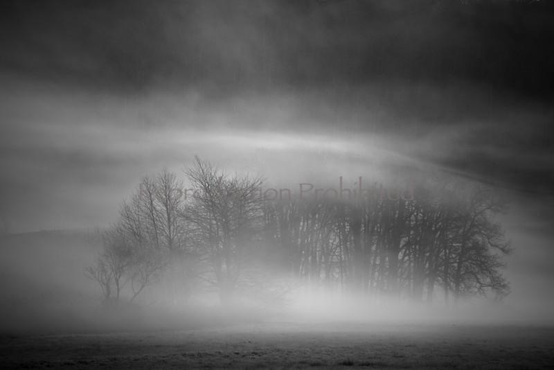 Light and Dark Steigerwald NWR, WA. March 2013