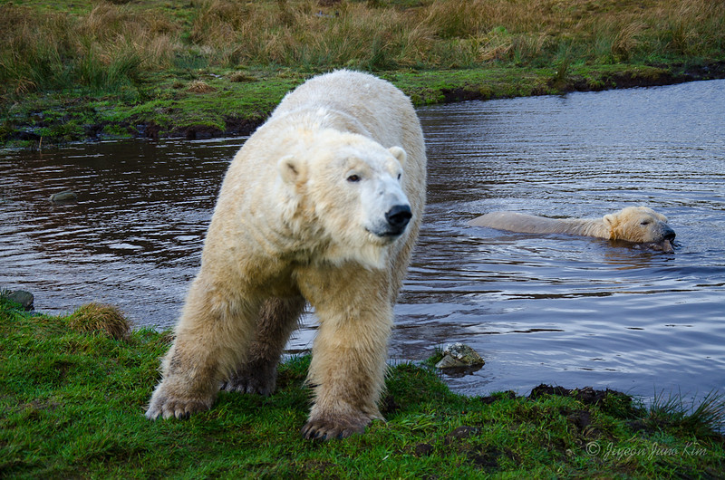 Scotland-Highland-8944.jpg