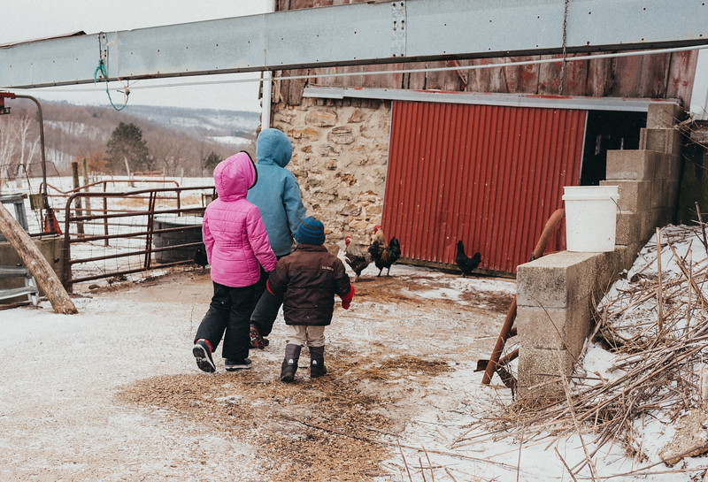 Sheep Shearing-3.jpg