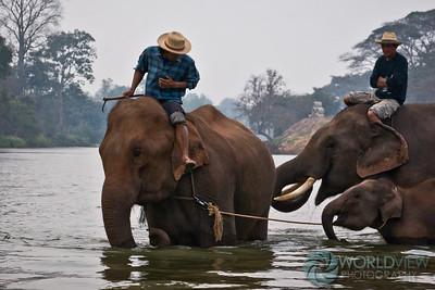 Mega family morning bath (Ping River, northern Thailand)