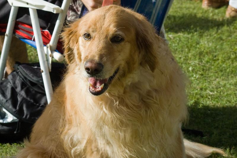 Boca Raton Dog Show-112.jpg