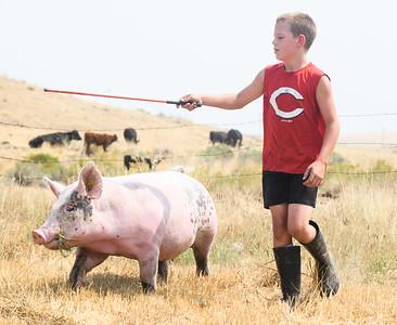2021 4h Pigs