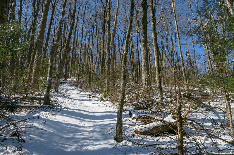 Green Knob Trail -- 4,000'
