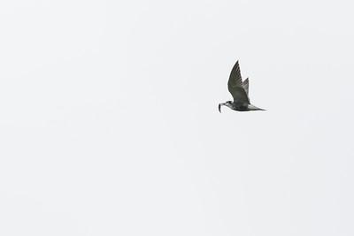 vogels zouweboezem