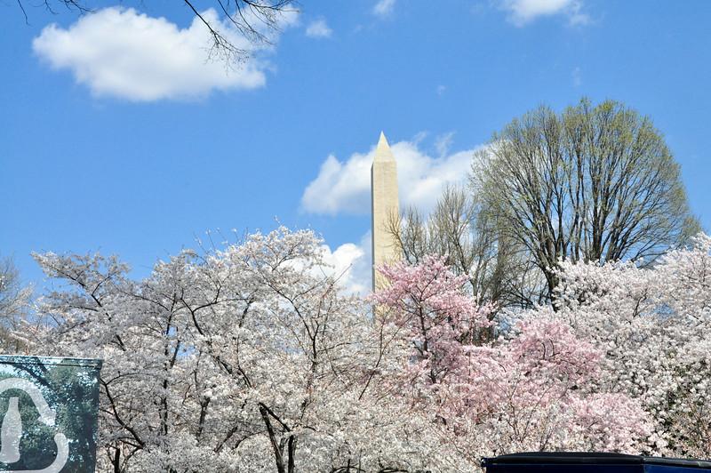 Cherry Blossoms 2014 116.jpg