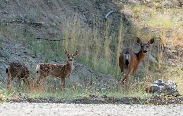 20200801 Mama and baby deer
